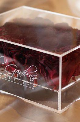 Bordo ruže u modernoj prozirnoj kutiji - 20 cvjetova