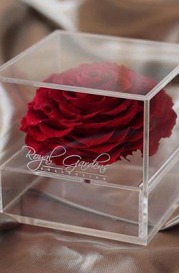 Crvena ruža u modernoj prozirnoj kutiji