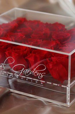 Crvene ruže u modernoj prozirnoj kutiji - 20 cvjetova