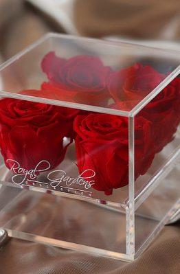 Crvene ruže u modernoj prozirnoj kutiji - 4 cvijeta