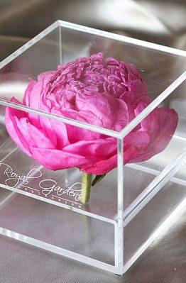Tamnorozi božur u modernoj prozirnoj kutiji - 1 cvijet