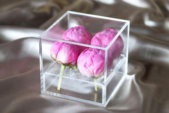 Tamnorozi božuri u modernoj prozirnoj kutiji - 4 cvijeta