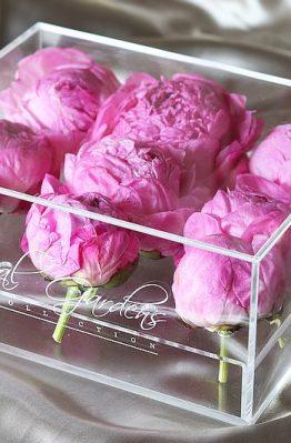Tamnorozi božuri u modernoj prozirnoj kutiji - 9 cvjetova
