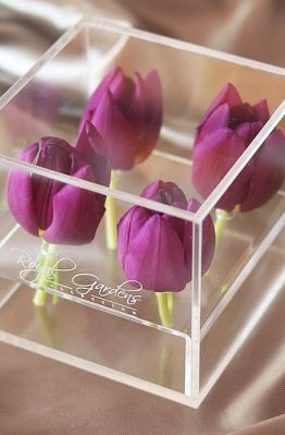 Lila tulipani u modernoj prozirnoj kutiji - 4 cvijeta